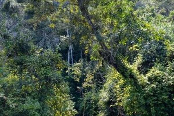 madagaskar-aug16-035EA3CE7FD-6934-3A02-86D2-192519EB5E31.jpg